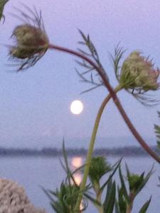moonbeam_1