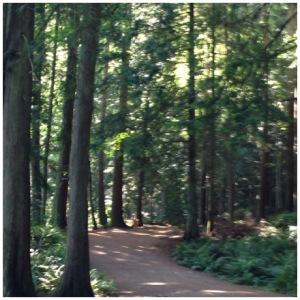 Chuckanut Trail