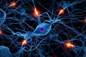 neuralpathways